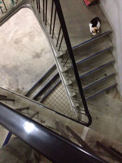 Cat Urban Geometry