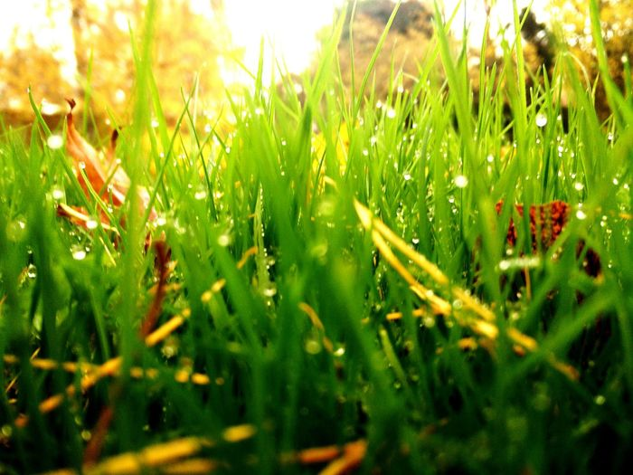 Beauty In Nature Green Blades Of Grass Colour Of Life Enjoying The Sun ☀ Wet Sunny☀ Very Sunny Raining Outside