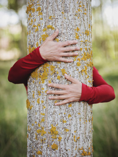 Beautiful Hugging A Tree Life Love Nature Woman Ecology Embracing Environment Environmental Conservation Focus On Foreground Forest Hand Harmony With Nature Human Body Part Nature Outdoors Protection Spring Sustainable Tree Tree Trunk Trunk Trunk Tree Women