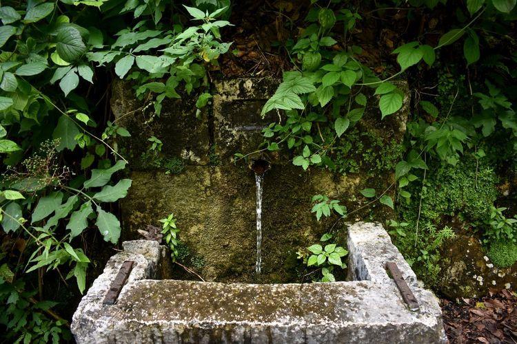 Stone wall by fountain in garden