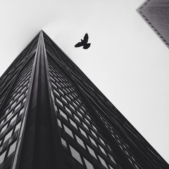 The Architect - 2014 EyeEm Awards Architecture Bird Living Bold EyeEm X WhiteWall: Architecture Market Bestsellers 2017