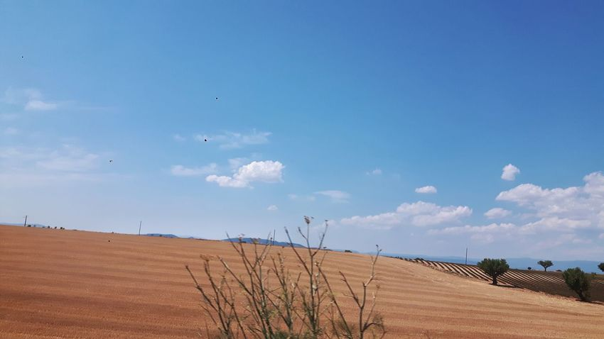 Nature Outdoors Tranquility Sky Day Beauty In Nature Blue Tranquil Scene Scenics Landscape Cloud - Sky Tree Provence Corn Cornfield Cornfield With Blue Sky Cornfield And Sky Summer Cornfield In July Dry Hot Arid Agriculture Agricultural Land