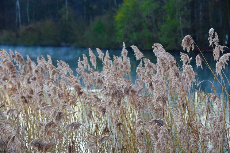 Grasses at