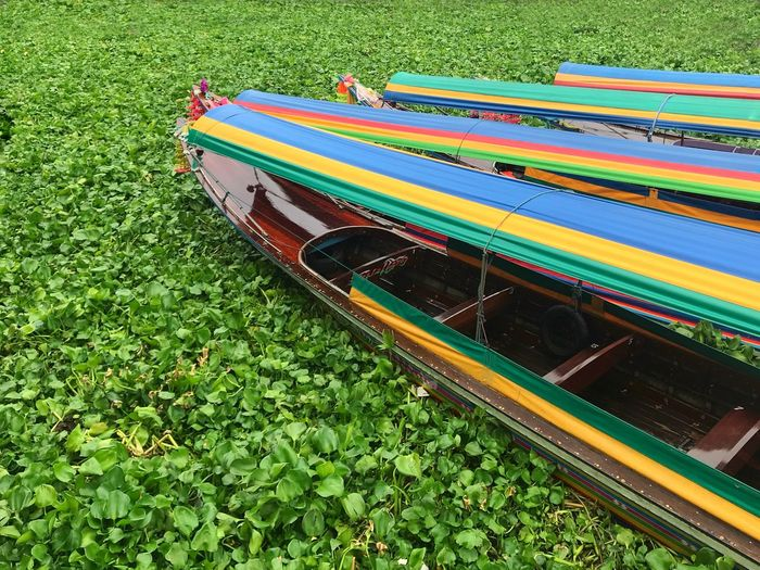 Longtail boats stuck in plants Bangkok Travel Longtail Boat Plant Green Color Grass High Angle View Day Nature Growth No People Outdoors Nautical Vessel Beauty In Nature The Traveler - 2018 EyeEm Awards My Best Travel Photo It's About The Journey The Mobile Photographer - 2019 EyeEm Awards The Traveler - 2019 EyeEm Awards