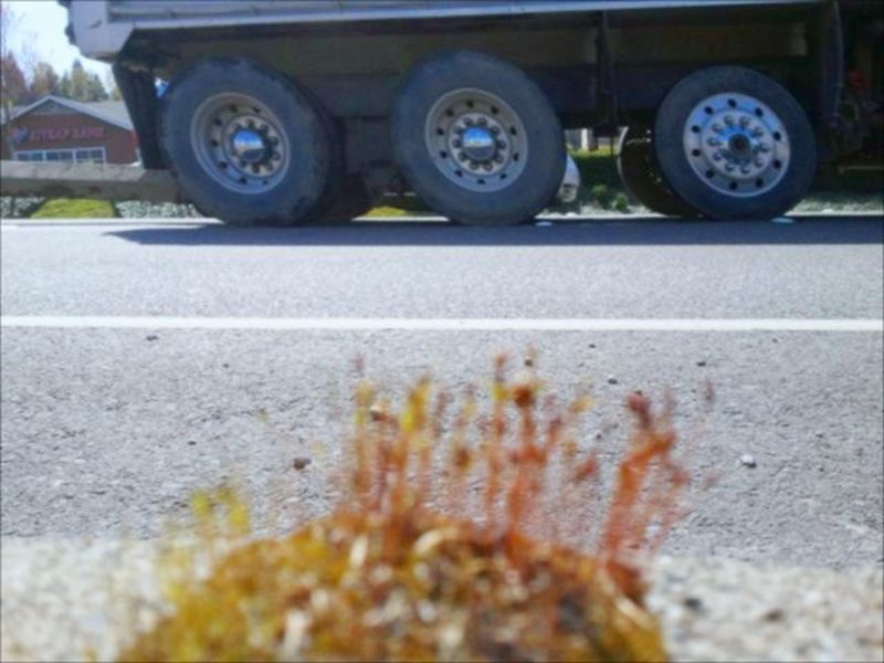 Missed focus. Edit_masters On The Road Walking Around Moss And Lichen