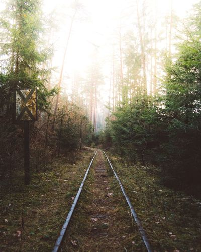 Tree Nature Tranquility Forest Tranquil Scene The Way Forward Railroad Track Day Beauty In Nature No People Growth Outdoors Rail Transportation Transportation Scenics Straight Landscape