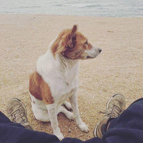 日日陪我散步的狗狗. Dog Beach Unawatuna SriLanka