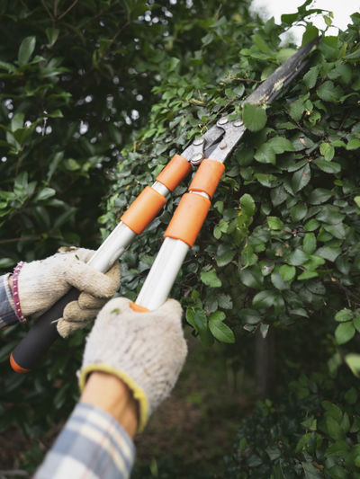 Cropped hands of man using pruning shears to cut plant