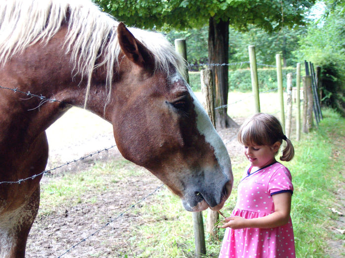 Feeding Animals Animal Wildlife Boulonnais Casual Clothing Child Childhood Day Domestic Domestic Animals Females Girl Hairstyle Herbivorous Horse Innocence Large Horse Livestock Mammal One Animal One Person Outdoors Pets Standing Vertebrate