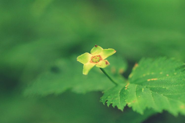 野草 Wildflower Green Botany Macro Photography Leaf Autumn Close-up Plant Green Color Animal Themes Leaf Vein