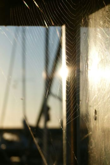 Saturdaymorning Habour Spiders Web Playing With Sunlight no edit no filter ♥