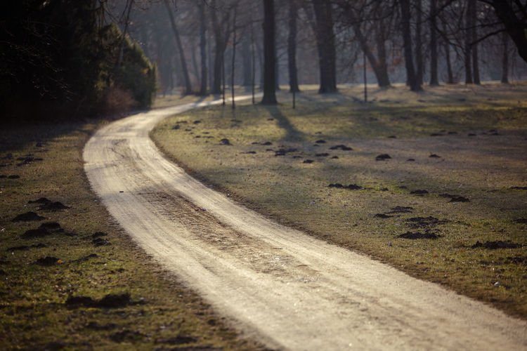 Beauty In Nature Curve Day Forest Landscape Nature No People Outdoors Road Scenics The Way Forward Tranquil Scene Tranquility Tree Winding Road