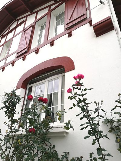 Biarritz FRANCE Architecture Building Exterior Built Structure Window Low Angle View Day Outdoors Red Flower No People City Nature nowember 2017 Beauty In Nature Plant Pink Color Fragility Petal Flower Head Autumn Green Color 2017 Biarritz, France, November Tranquility