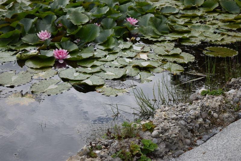 Flussufer Stein Teichrosen Day Nature No People Outdoors Wasser