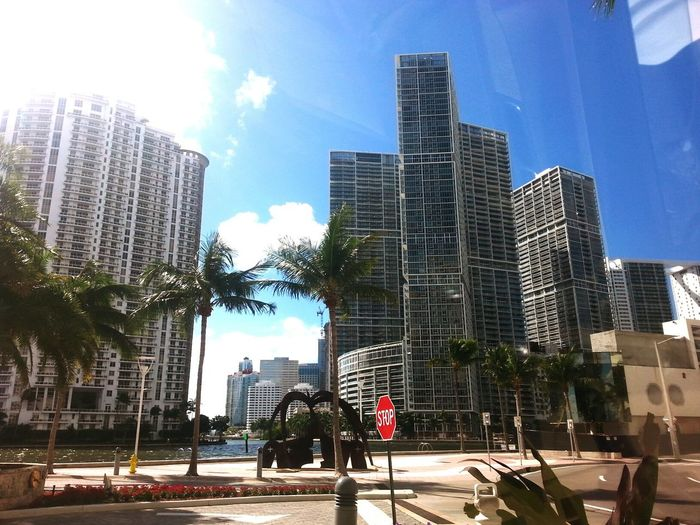 City Skyscraper Architecture Outdoors Sky Building Exterior Urban Skyline Day No People Tree Cityscape miamiphotographer #miamiflorida #miamifashion #miaminights #miamiliving #miamistyle #miamibound #miamibeach #miamilife #brickell #wynwood #coralgables #sobe #igersmiami #ilovemiami #illgrammers #ig_masterpiece #incredible_shot supremeshooters photoofthe Miami Florida Travel Palm Tree Condo Ocean View Womansburg Richpeople Luxurylifestyle