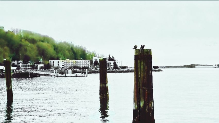 OtherMindMedia Beautiful Nature Washington Seattle's Best Waterfront EyeEm Nature Lover Urban Escape Taking Photos