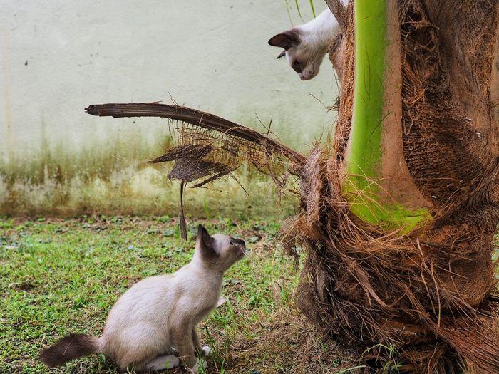 panjang dan pendek Animals Pets Playful Cat Playful Cats Sky