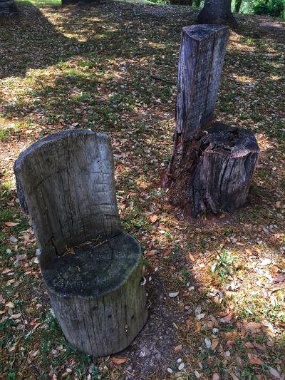 Old tree seats