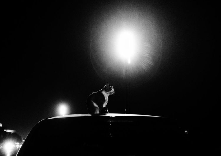 Side view of man sitting in illuminated lights