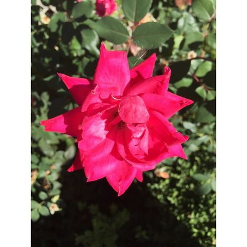 Flower Pretty Nature :)