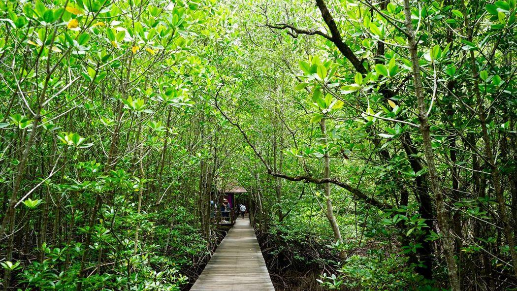 ศูนย์ศึกษาการพัฒนาอ่าวคุ้งกระเบนอันเนื่องมาจากพระราชดำริ จันทบุรี Chanthaburi Thailand Green Color Growth Nature Day Beauty In Nature The Way Forward Outdoors Real People Tree Plant One Person Freshness People Walking Sonya7m2