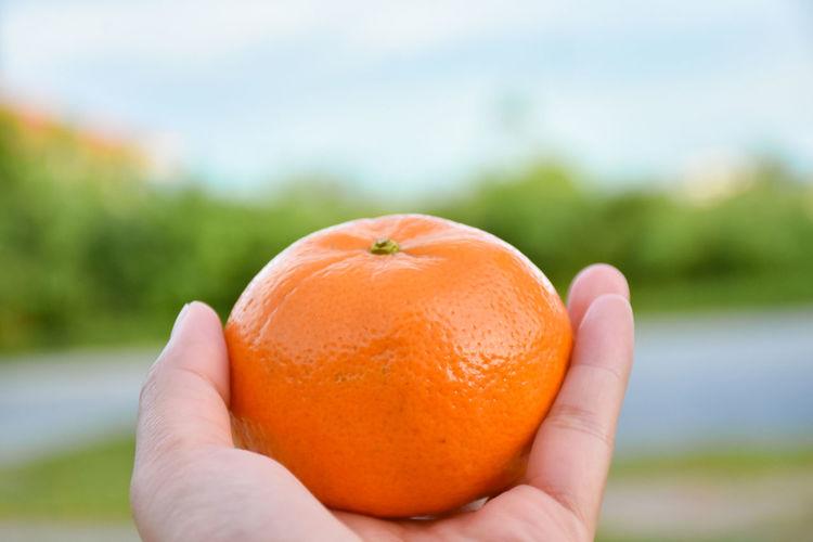 Close-up of hand holding orange