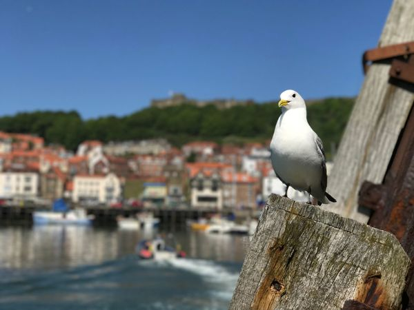 Glamorous Gull Bird One Animal Seagull No People Animals In The Wild Perching Animal Themes Day Animal Wildlife Focus On Foreground Outdoors Built Structure Harbour harbor sea cClear SkynNaturecClose-upsSky