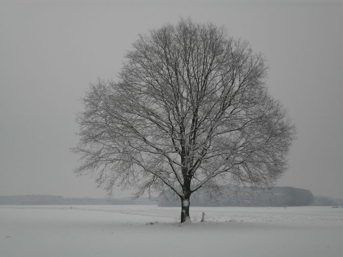 Cold Temperature Winter Snow Bare Tree Frozen Landscape Tree Branch Tree Trunk Nature Beauty In Nature Outdoors Frozen Water No People Day Lonely Tree In Field Lonely Tree Freshness Beauty In Nature Snow ❄ Snow Day Snow❄⛄ Cold Winter ❄⛄ Frozen Cold