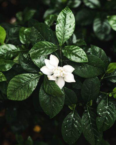 White in the midst of green Plant Part Leaf Plant Beauty In Nature Growth Close-up Freshness Flower Fragility Vulnerability  Flowering Plant Green Color Focus On Foreground Nature Flower Head Inflorescence No People White Color Day Petal