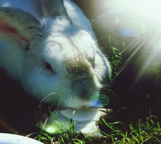 Rabbit Pet Snowy Grass
