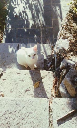 Cats Cat Lovers Catfish Catsagram Cats Of EyeEm EyeEm Nature Lover