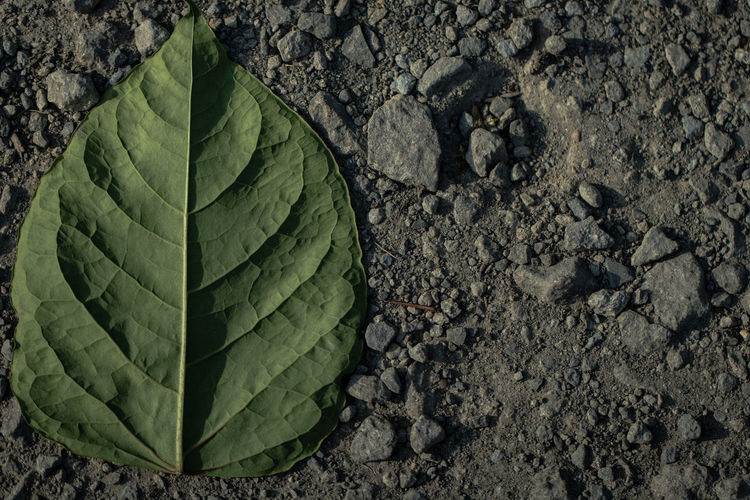 Just another leaf (2)~ Beauty In Nature Close-up Day Directly Above Dirt Field Green Color Growth High Angle View Land Leaf Leaf Vein Natural Pattern Nature No People Outdoors Pattern Plant Plant Part Textured  The Still Life Photographer - 2018 EyeEm Awards