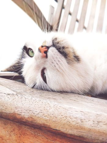 cat Pets Feline Domestic Cat Portrait Whisker Close-up Kitten Young Animal Infant Foal Young Bird Pet Bed Cygnet Calf Puppy Duckling Animal Family Tabby Cat Tabby Paw Animal Nose Animal Mouth Animal Hair Animal Tongue Leopard Snout Carnivora Animal Eye