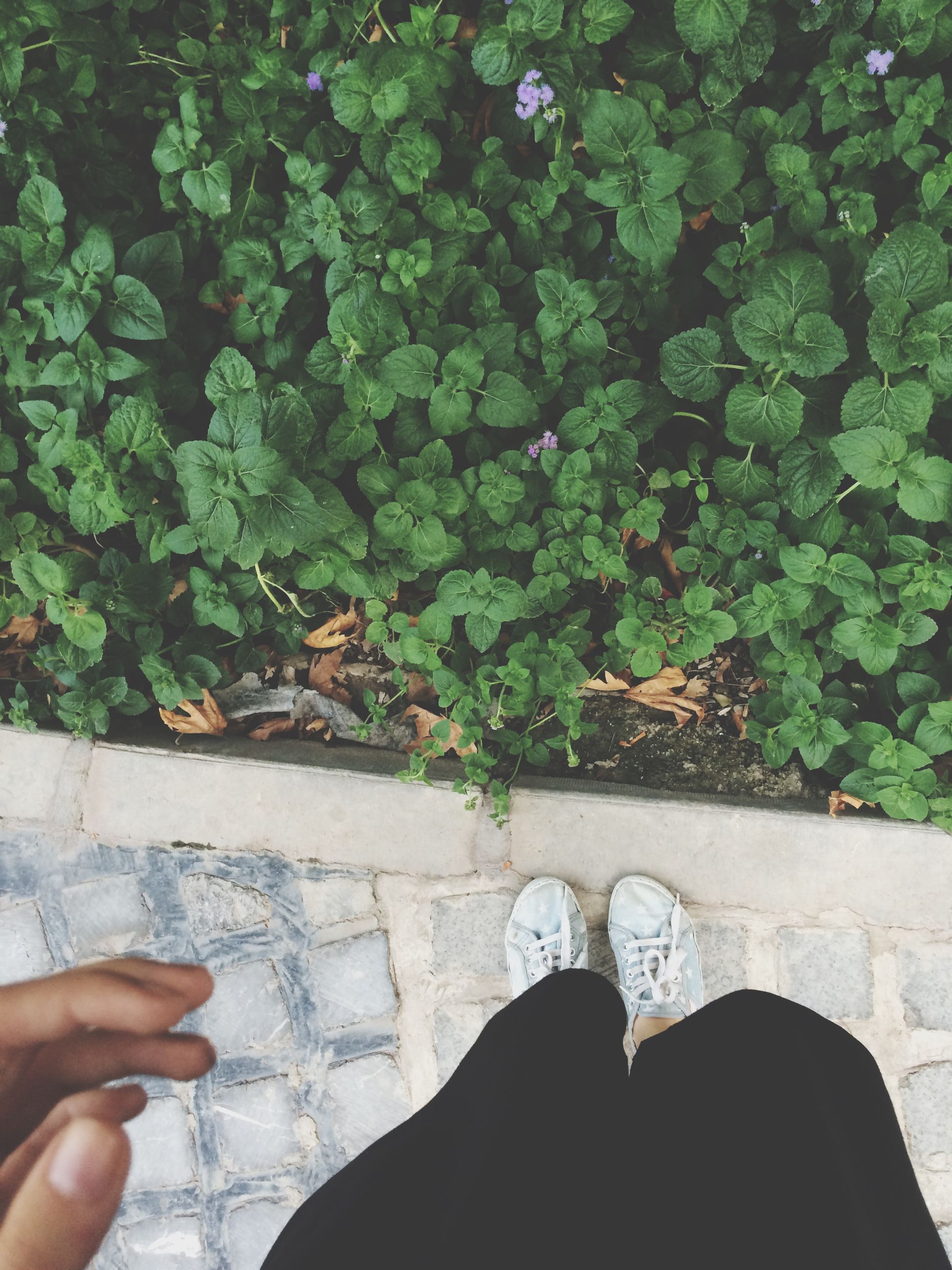 personal perspective, low section, person, shoe, leaf, human foot, lifestyles, part of, unrecognizable person, standing, plant, men, high angle view, leisure activity, green color, growth, footwear