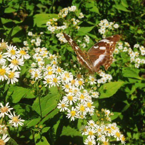 戸隠 森林植物園 みどりが池iPhone⑸で蝶の撮影です🌿japan nagano prefecture togakushi forest park butterfly Fall Beauty Butterfly 戸隠 Flower