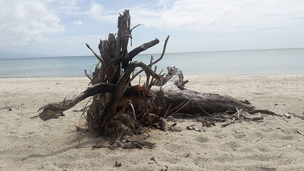 Beach Beachfun Beachside Landscape Skyline Skyporn Old Damage Tree Travel_ph Travelling Travel Photography Backpacker Workandtravel Localview Localtravel Pandan Antique Amazingphil