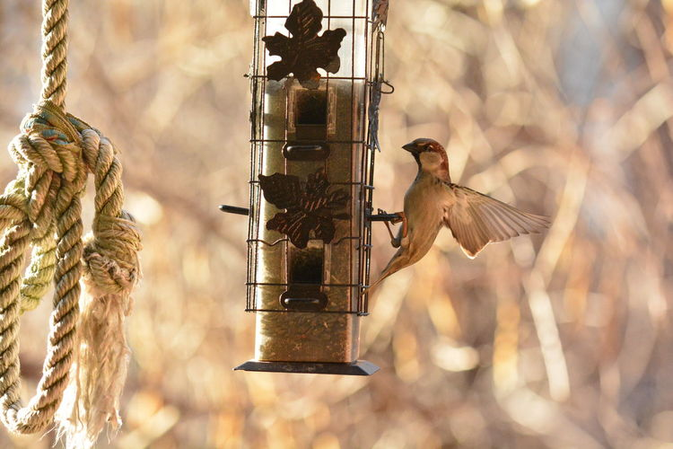 Bird perching on feeder