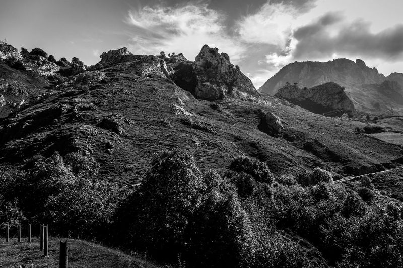 Beauty In Nature Cloud - Sky Day Growth Low Angle View Nature No People Outdoors Picos De Europa Scenics Sky Tranquility Tree