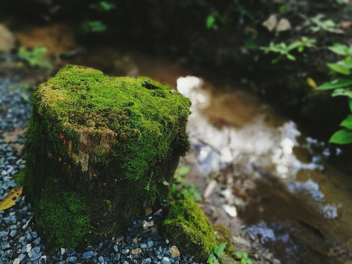 Water Nature Close-up Green Color Beauty In Nature No People Rock Moss & Lichen Fern calm