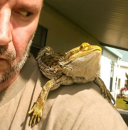 Stinkeye Standoff Pogona Bearded Dragon Sunning