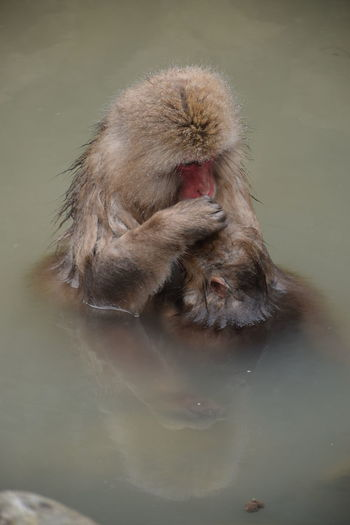 High angle view of monkey in hot spring