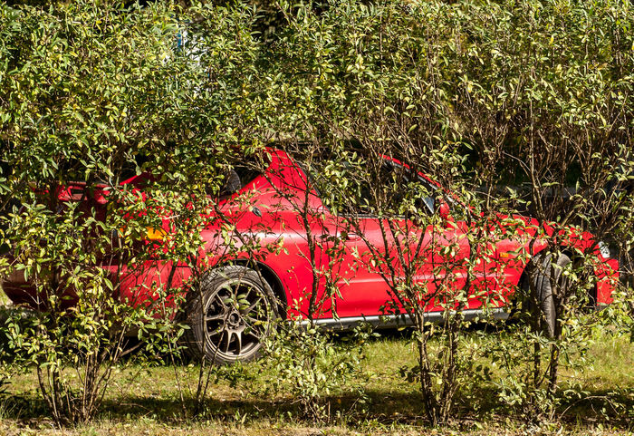 Honda del sol in natural environment Mode Of Transportation Transportation Plant Land Vehicle Motor Vehicle Red Day Land Car Nature Field Abandoned No People Growth Obsolete Tree Damaged Outdoors Green Color Decline Deterioration Wheel Green Convertible