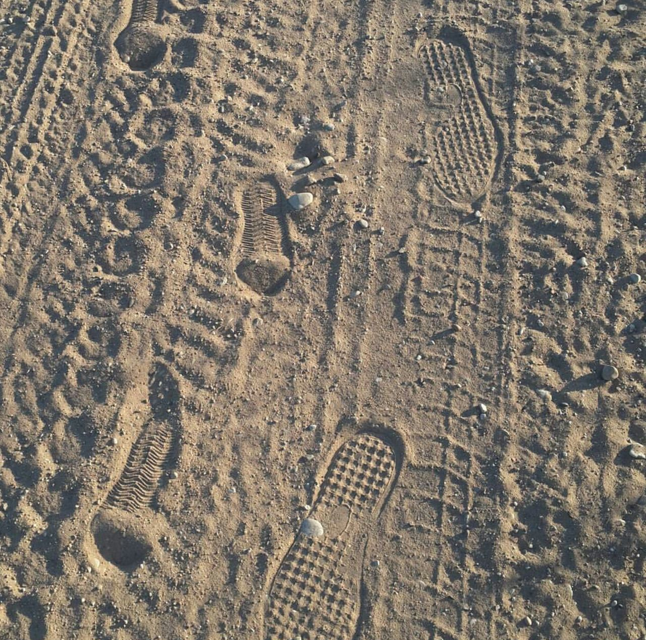 sand, beach, footprint, high angle view, day, paw print, brown, pattern, full frame, outdoors, no people, backgrounds, track - imprint, textured, tire track, nature