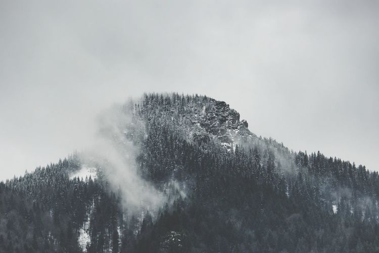 Mountain Peak Hidden In The Sky Cloud - Sky Misty Mountains  Forest Snow On Mountain Snow On Trees Spruce Trees Gray Sky Winter Scene Changing Weather Low Angle View Winter Landscape