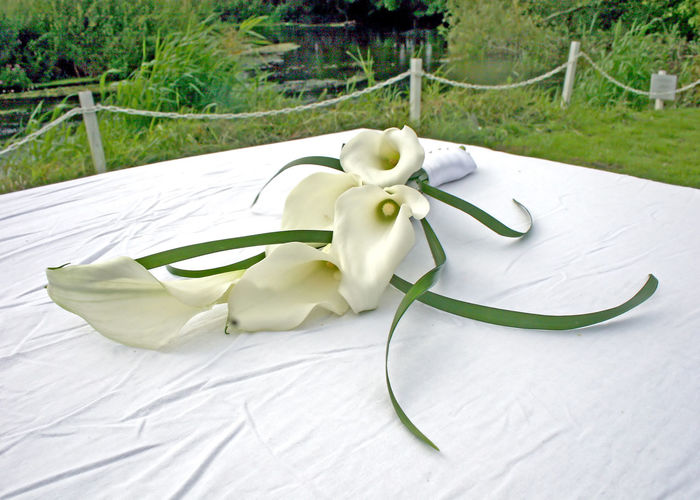 A lily sitting on a table after a wedding. Lily Beauty In Nature Close-up Day Flower Flowering Plant Focus On Foreground Grass Green Color High Angle View Lilies Nature No People Outdoors Plant White Color