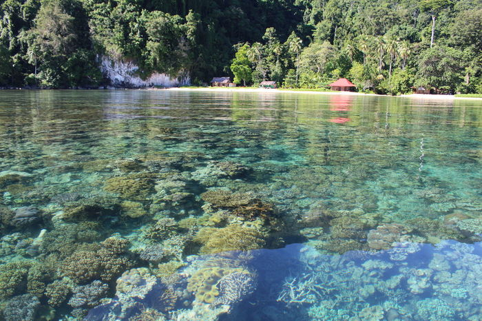Indonesia 💙💙 Ambon Maluku  Colour Of Life Indonesia Scenery Photography BestScenery Underwater Photography Sobeautiful Seaview Blue Green Red