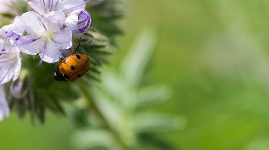 Ladybug Animal