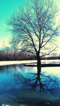 Reflection Tree Nature Beauty In Nature Tranquility Water Sky Lake Tranquil Scene No People Scenics Outdoors Branch