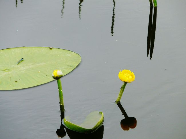 Summer Memories 🌄 Nature On Your Doorstep Somerset England Nature Somerset Levels Uk In All Its Glory Lily Pads Insectes