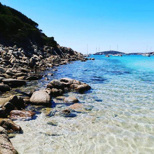 Chia Sea Clear